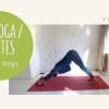 HIIT yoga pilates - cats and dogs